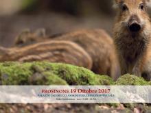 banner evento formativo del giorno 19 ottobre 2017 cinghiali